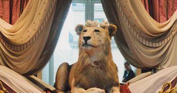 Bêtes royales et objets perdus © Marion Gronier